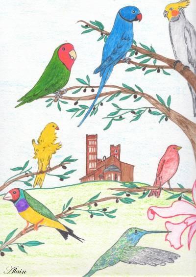 Oiseaux tmp